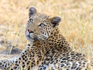 Just Add Land: African Safaris