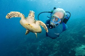 Cousteau and sea turtle, diving together