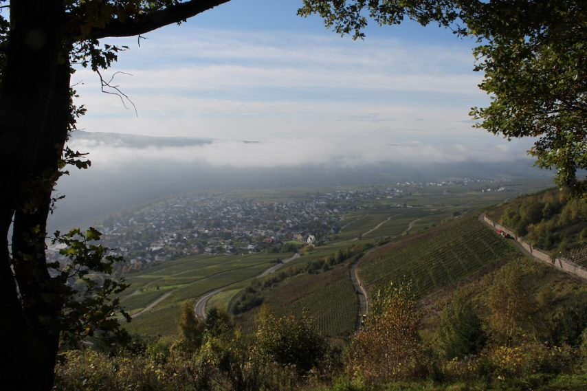 Kroev, the vineyards, the Mosel Valley