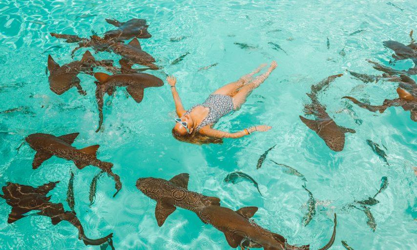 Emilia Taneva swims with sharks @bubbly.moments