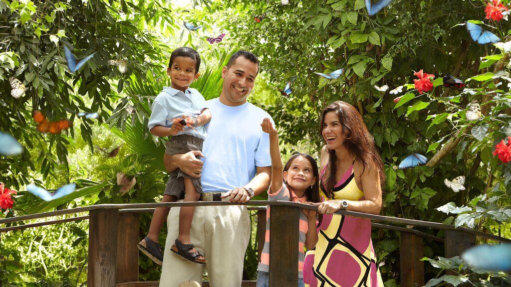 Family Vacation to Aruba