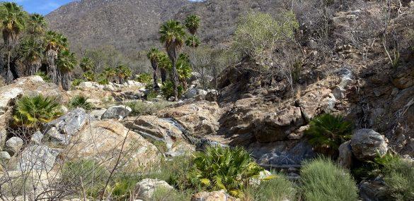 Hiking Mexico's Sierra de la Laguna